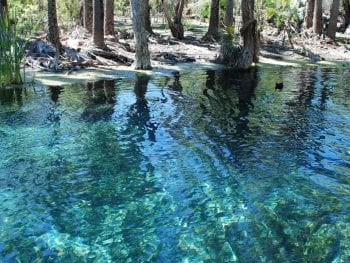 Mataranka hot springs - Australia