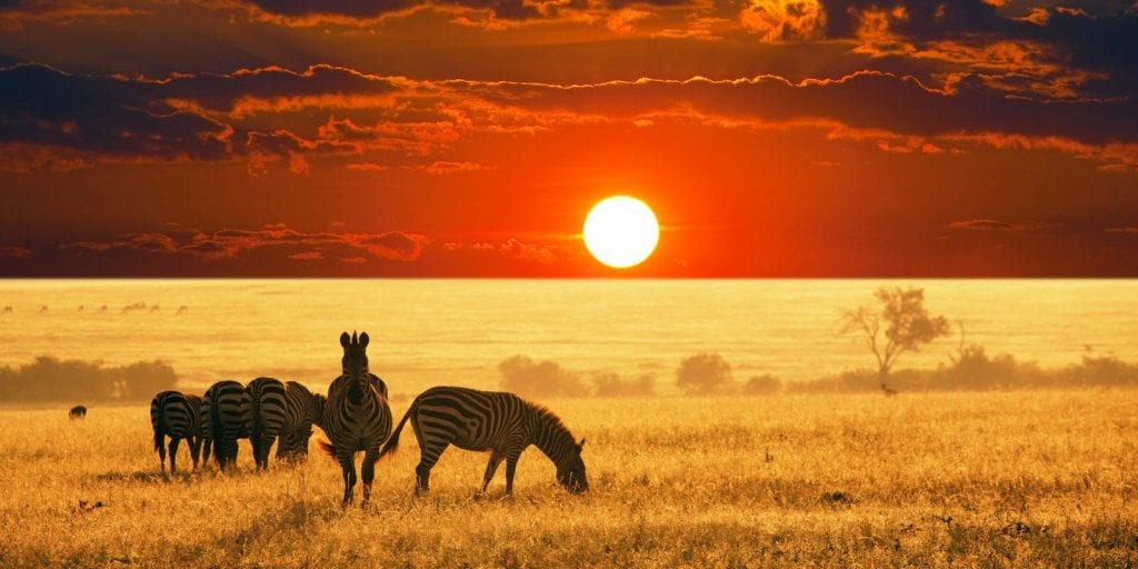 Best Africa Vacation Destinations Safari Zebra Sunset