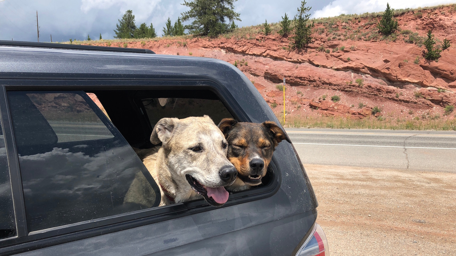 Inspirational Adventure Quote Dogs Truck Mountains