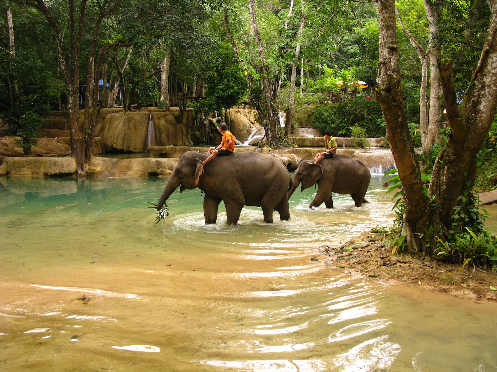 Elephants, Laos