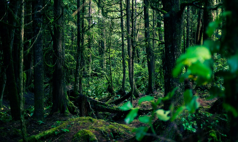 Vancouver Island - Green Point