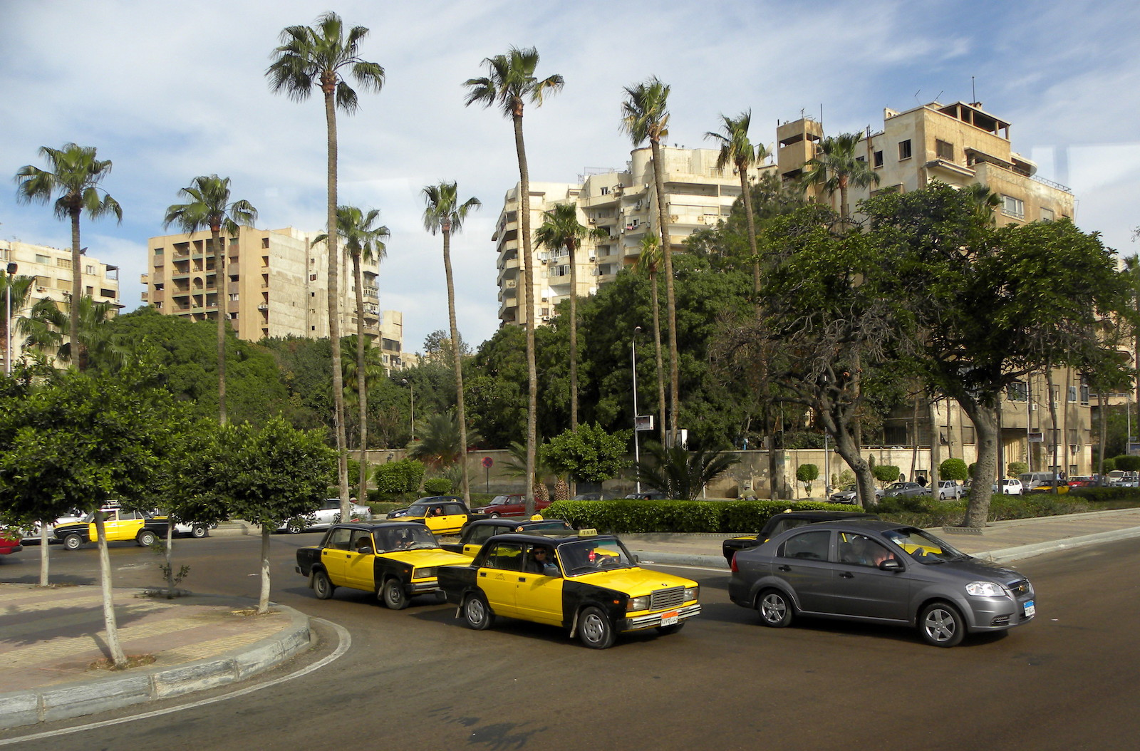 Taxis and Palms Alexandria, Egypt