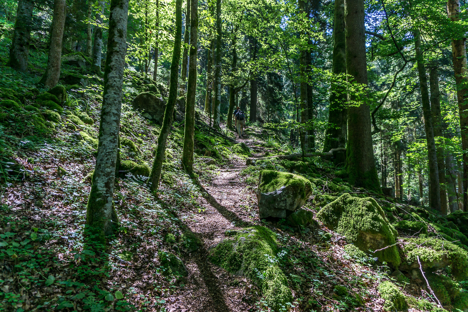 Black Forest of Germany