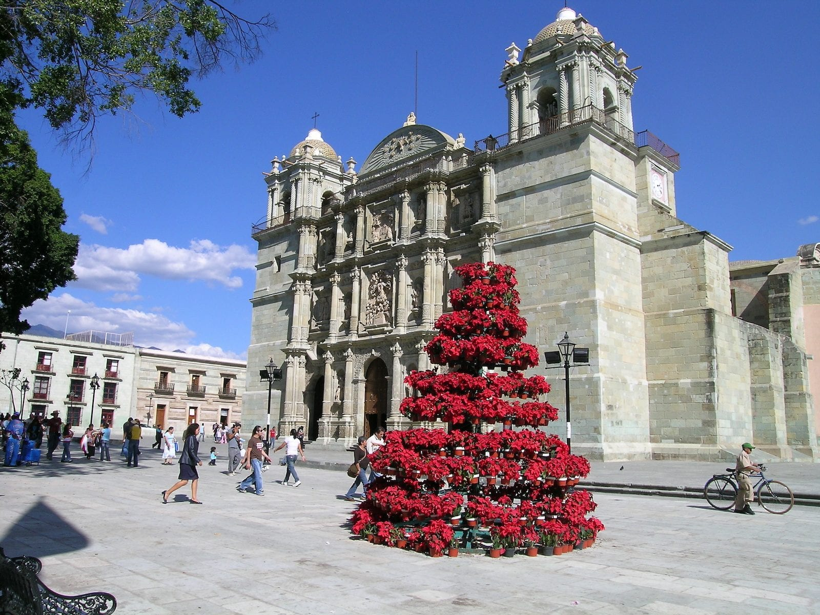 Poinsettia Tree and Catedral de Oaxaca, Mexico