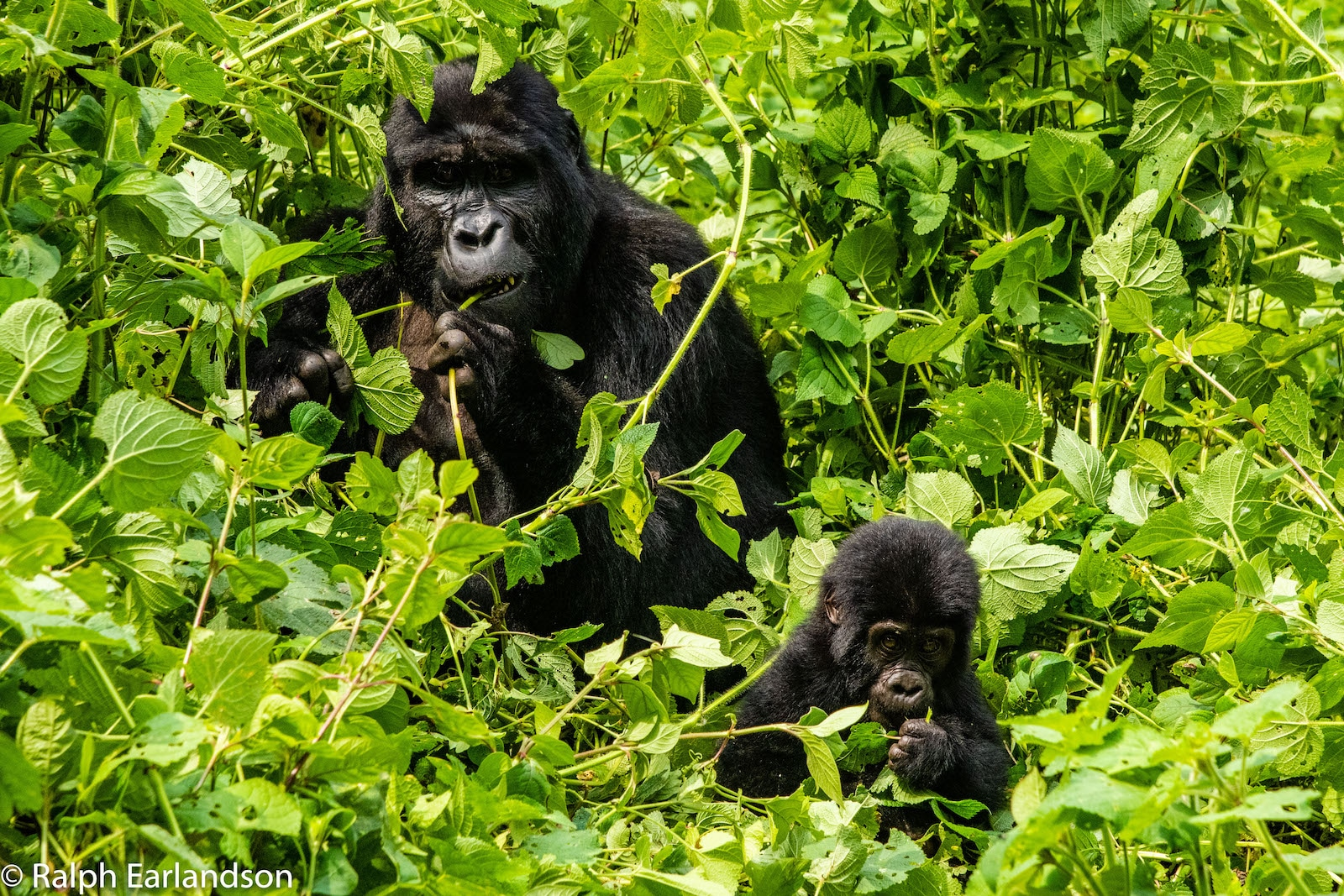 Bwindi Impenetrable National Park, Uganda
