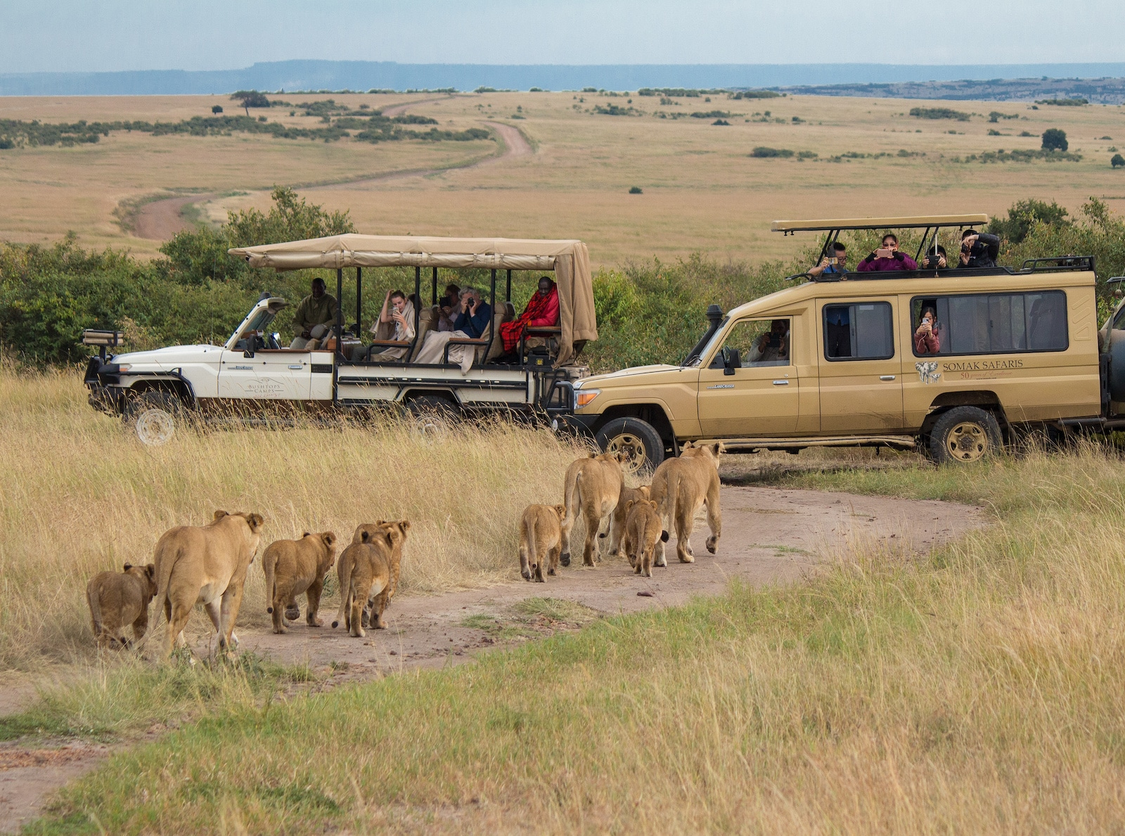 Serengeti National Park in Mara Region, Tanzania