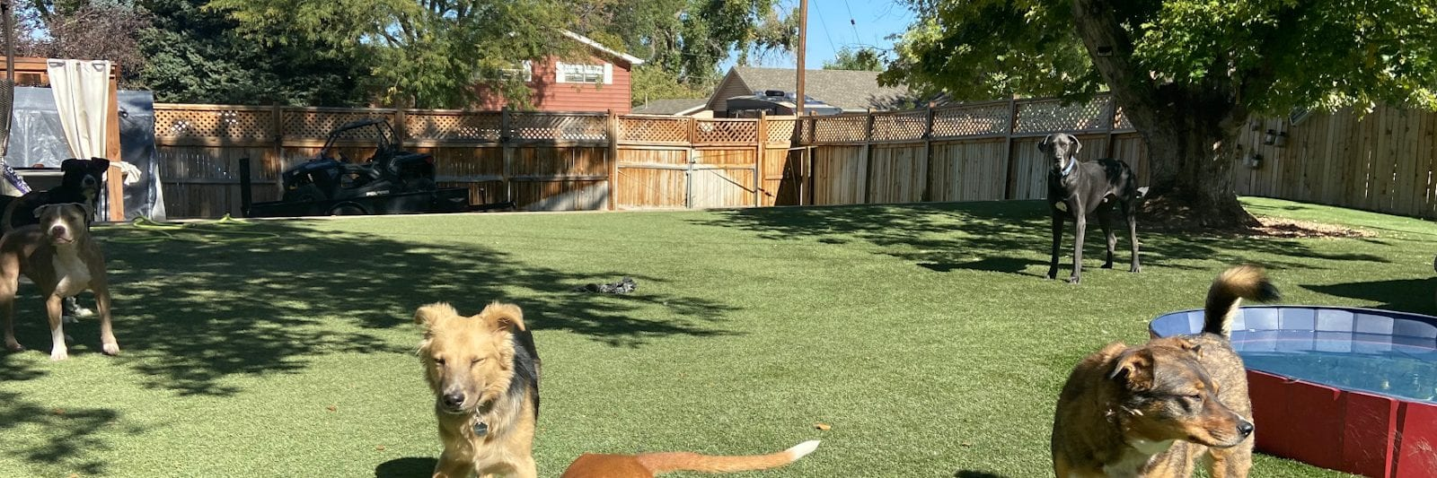 Rover Dog Sitting Backyard Denver Colorado