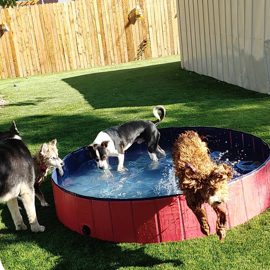 Rover Dog Sitting Playing in Small Pool