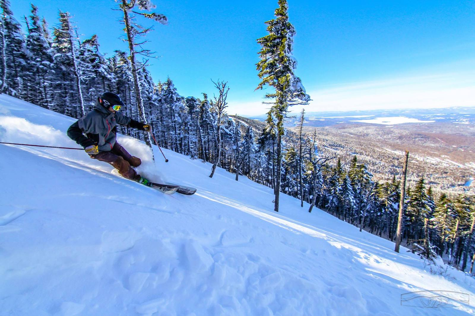 Image of a skier going through the trees at Saddleback Mountain Ski Resort in Maine