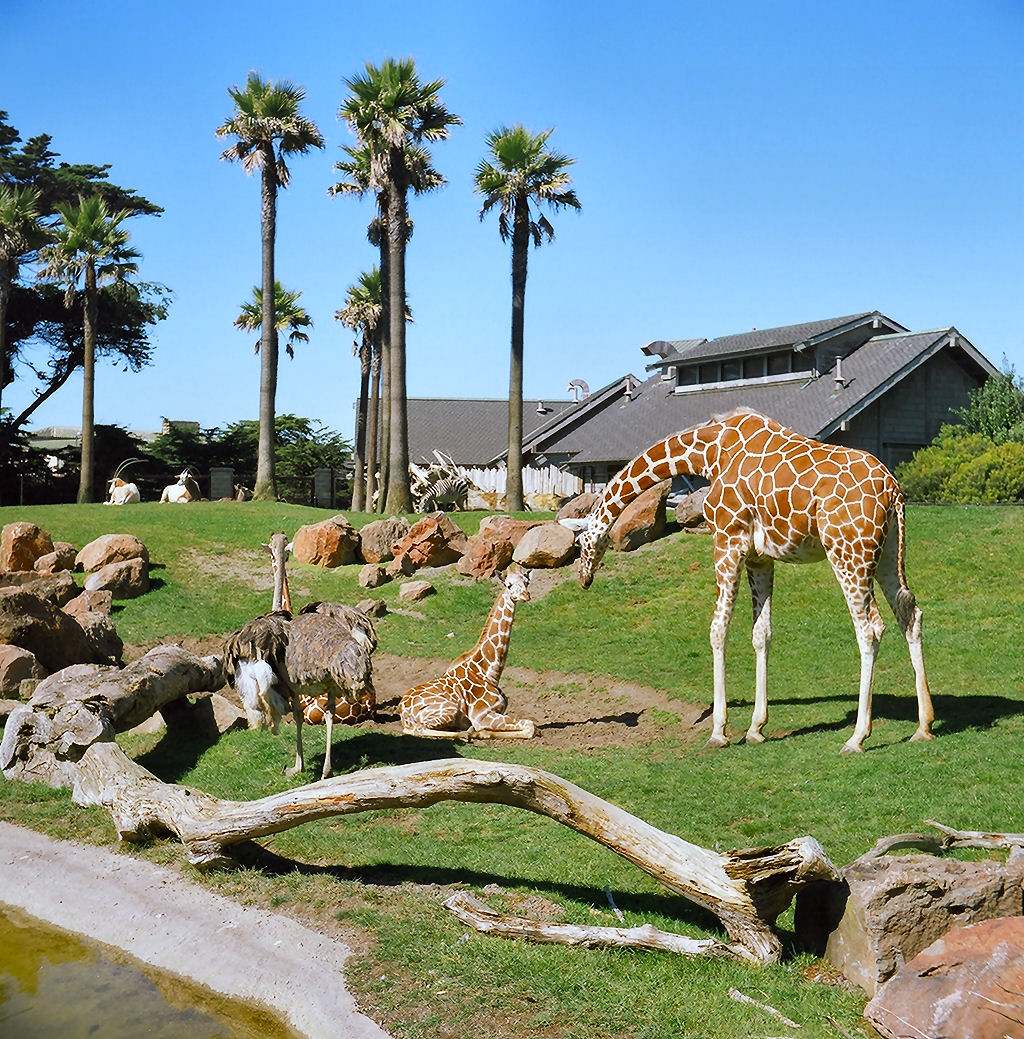 San Francisco Zoo, California