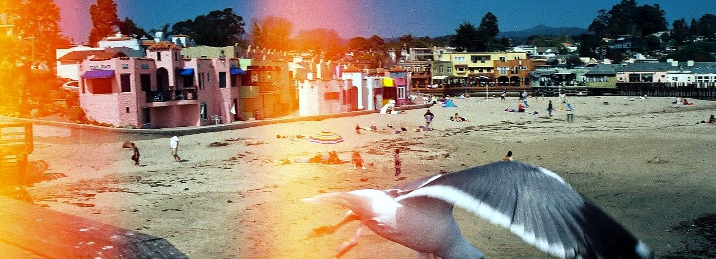 Capitola Beach California Seagull