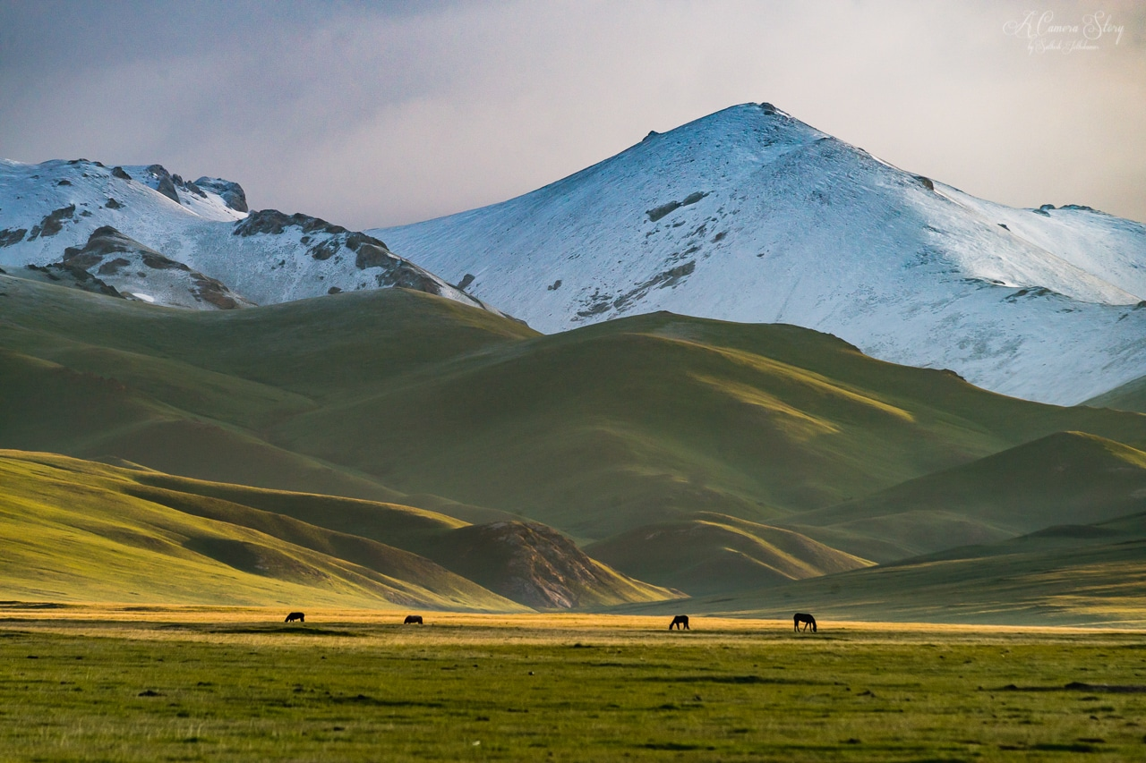 Morning in the Jailoo Kyrgystan Central Asia Landscape Wildlife