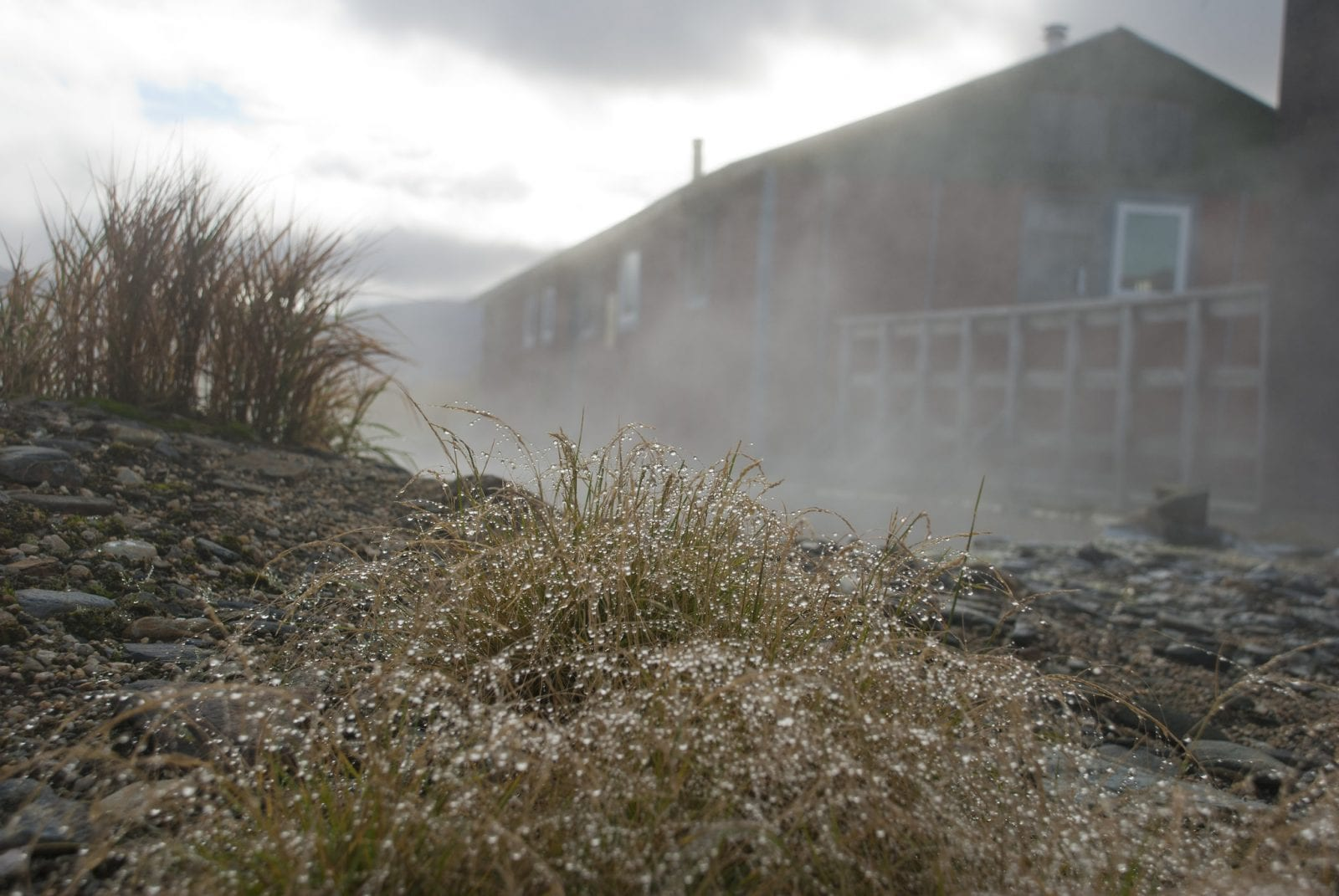 Image of droplet covered gross in front of the steamy bunkhouse building