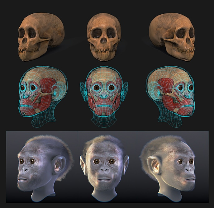 Taung child – Facial forensic reconstruction by Arc-Team